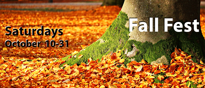 Tree with moss surrounded by fall foliage; with 'Fall Fest - Saturdays, October 10-31'