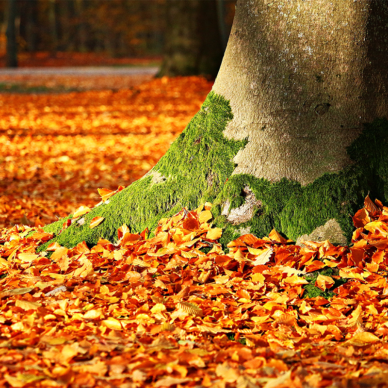Tree with moss surrounded by fall foliage